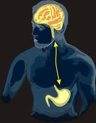 barsak ve beyin