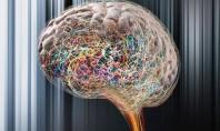 Otizm İle Epilepsi Arasında Bağ Olduğu Kesinleşti Diyebiliriz…
