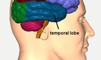 OTİZM, Zayıf Bağışıklık ve Beyin Disfonksiyonu Bağlantısı