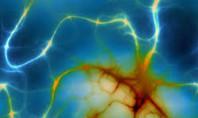 Frajil X Sendromu, Otizm ve Şizofreninin Nöronal Sinapslardaki  Ortak Mekanizmaları…
