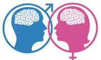 Erkeklerle Kadınların Beyni Gerçekten De Farklıymış…