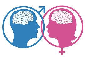 beyin kadın erkek