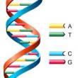 Otizm ile bağlantılı gen dizilimindeki değişiklikler, babanın yaşı ile ilgili olabilir mi ?