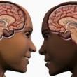 Yetişkin otizmli kızların beyni, tipik hemcinslerine kıyasla daha erkeksi !