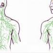 Beyinin Bağışıklık Sistemi ile Direkt Bağlantılı Olduğu İspatlandı