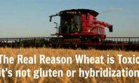 Gıda Toleransımız Neden Giderek Bozuluyor?