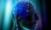 İnsan Beyninde Vücudun Atık Sisteminin İlk Kanıtı Keşfedildi